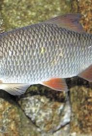 Тёплая зима убивает рыбу