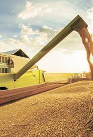 Из-за запрета экспорта российского зерна в мире началась паника