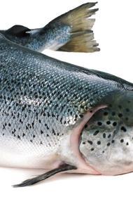 Китайцы оправдали лосося
