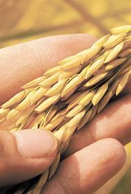 В Центральной России рекордный урожай зерна