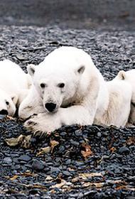 «Роснефть» следит за экобалансом в Арктике