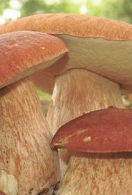 Россия претендует на 20% мирового рынка лесных ягод и грибов