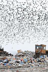 В Орловской области возникли проблемы с утилизацией мусора
