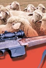 В Калмыкии борьба за пастбище для выпаса скота привела к убийству человека