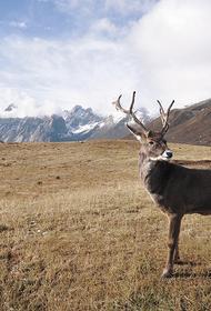 Владимир Путин подписал закон, распространяющий программу «Дальневосточный гектар» на Арктику