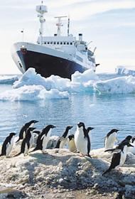 Правительство России утвердило план изучения в Антарктике запасов рыбы и криля