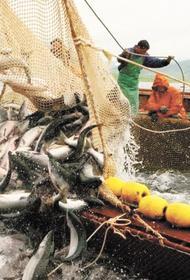 Вылов тихоокеанских лососей на Дальнем Востоке превысил 9 тысяч тонн