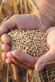 Financial Times: российское зерно может стать новой кремлёвской нефтью