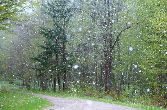 3 мая Санкт-Петербург накрыл снегопад