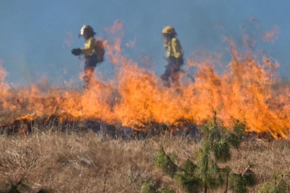 Сухая трава загорелась на северо-западе Москвы