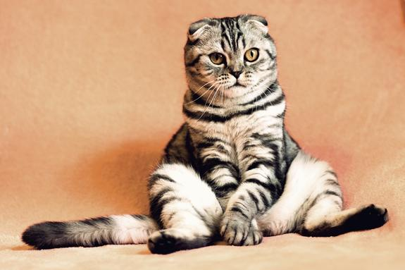 Москвич убил свою кошку из-за несостоявшегося свидания