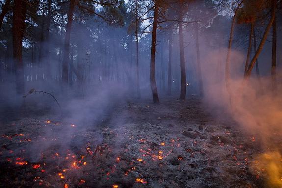 Алексей Текслер потребовал принять противопожарные меры на Южном Урале
