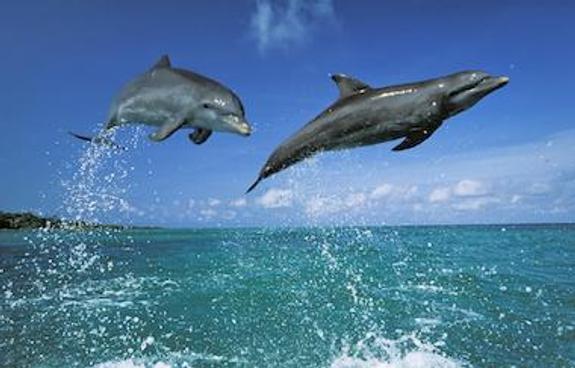 Выяснилось, почему у берегов Севастополя гибнут дельфины