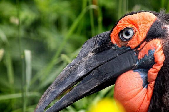 В Московском зоопарке на свет появились птенцы редчайшего вида ворона
