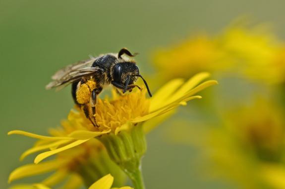 Уничтожение пчеловодства снизило урожайность всего сельского хозяйства страны