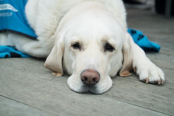 Стремление обзавестись собакой связали с генетикой