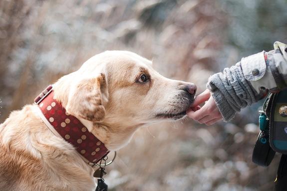 На северо-западе Москвы  собака покусала ребенка на детской площадке на глазах очевидцев