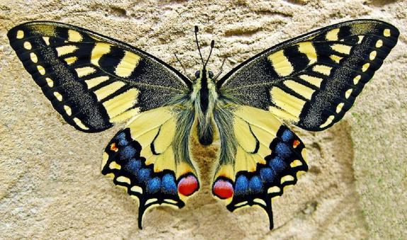 Горячий ТОП региональных новостей: «ночные бабочки» в Костроме