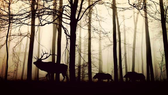 Свердловская область: от бешенства начали вакцинировать диких животных