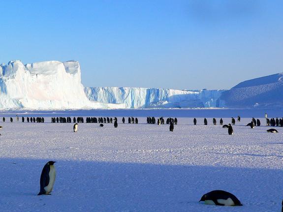 Исследователи нашли в Антарктиде спасение от всемирного потопа