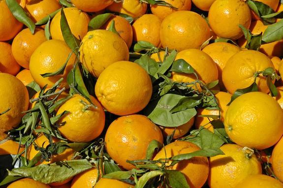 Через 60 лет в Сибири будут расти апельсины