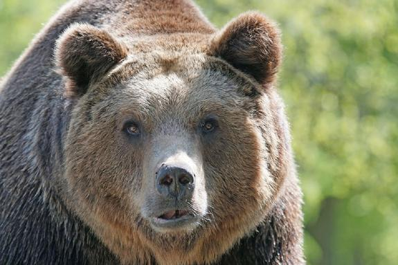 В США мужчина подрался с медведем ради спасения собаки