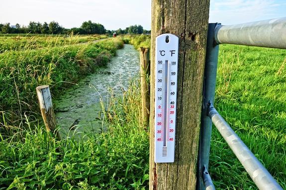 О похолодании до одного градуса в ночь на 14 июня в Подмосковье  предупредили синоптики