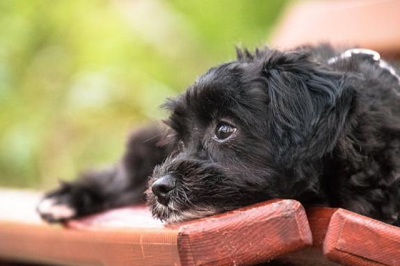 """Ученые: собаки научились делать """"щенячьи глазки"""" из-за людей"""