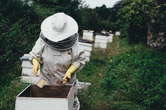 Россельхознадзор нашел виновного в массовой гибели пчел
