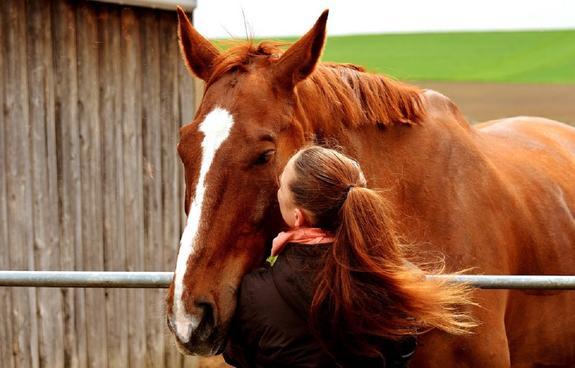 В Ленобласти девять лошадей погибли при пожаре в конюшне