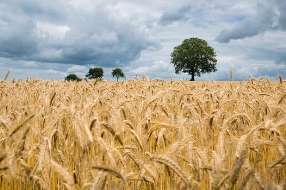 Московская область: урожайность кормовых культур повысилась в 2019 году