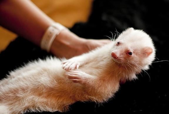 Какие экзотические животные являются самыми популярными в России