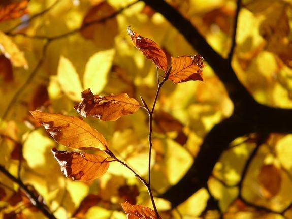 Погода в Москве 5 ноября может побить столетний рекорд