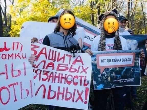 Зоозащитников пытаются втянуть в скандал в Краснодаре
