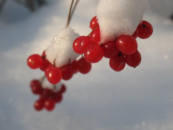 В столичный регион в четверг придут морозы до минус 12 градусов