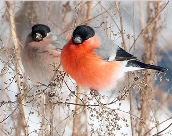 Управление ветеринарии дало оценку массовой гибели птиц в Рязани