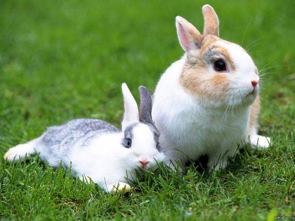 Новая родина кроликов