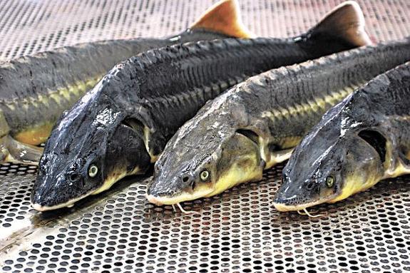 Штраф за браконьерскую рыбалку увеличат до миллиона рублей