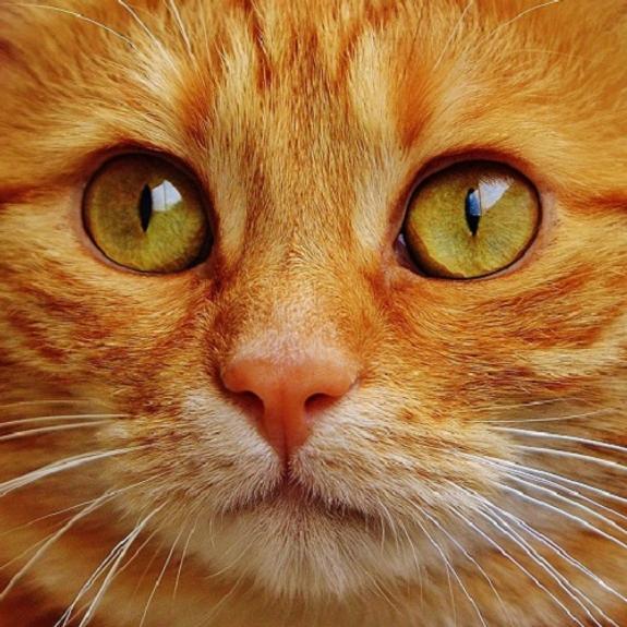 Кошки, рок-н-ролл и знание Уголовного кодекса: что россиянам нужно для счастья