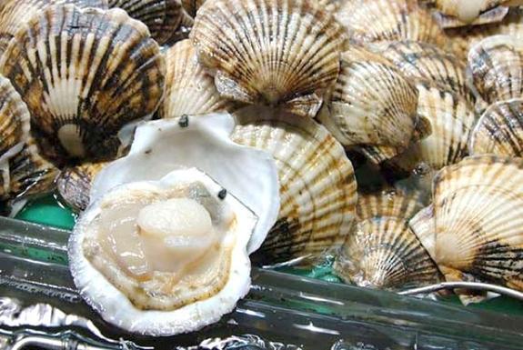Японское море богато моллюсками