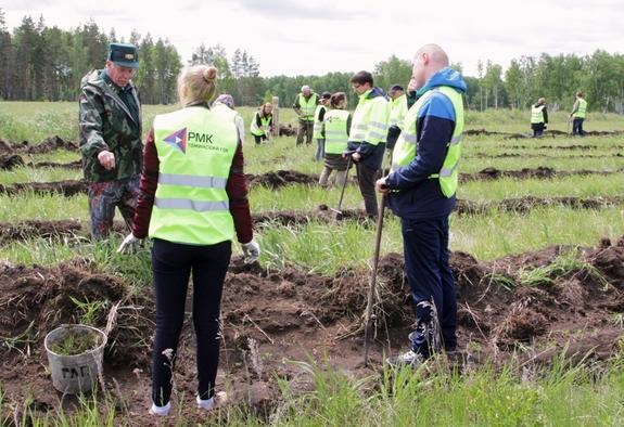 В Томинском высадили 66 тысяч хвойных деревьев