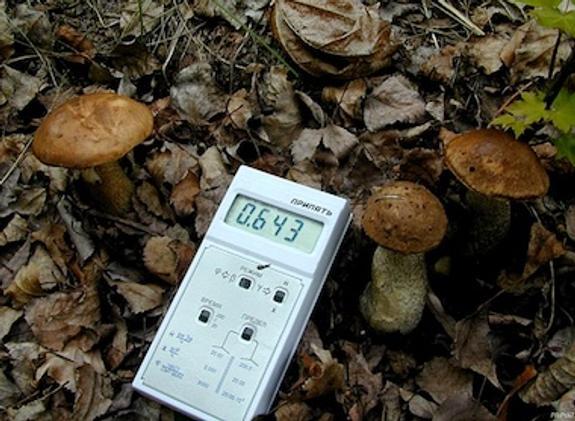 """NASA использует для разработки антирадиационного крема """"чернобыльские"""" грибы"""