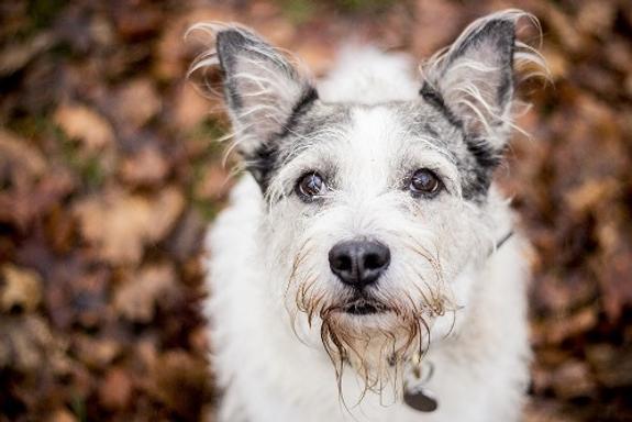 В Британии собака задавила на тракторе своего хозяина-миллионера