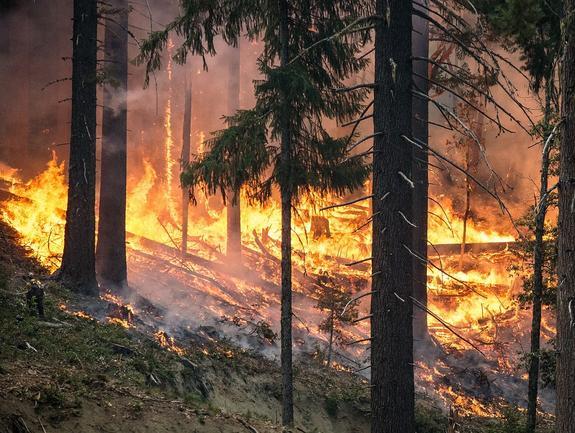 Сорокаградусная жара скоро накроет некоторые регионы России