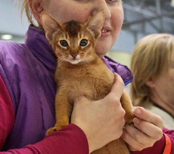 Жителя Бирюсинска осудили за издевательство над котёнком