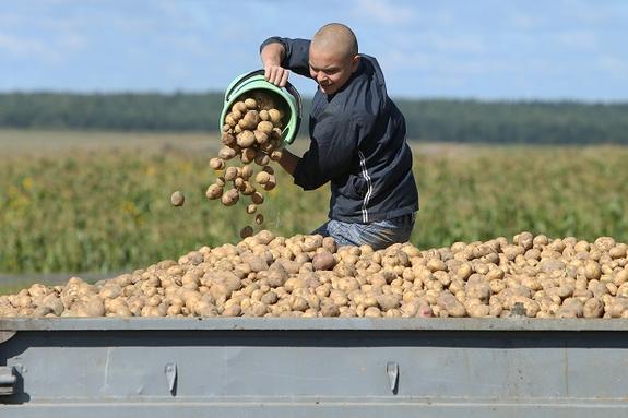 Сахалинская область завершает уборку овощных культур