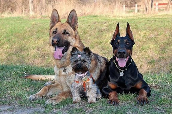 Ученые рассказали, кого собаки кусают чаще