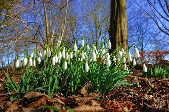 Синоптики дали прогноз, когда в Москву придут настоящая весна и тепло