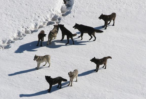 В подмосковной квартире 30 собак чуть не загрызли друг друга