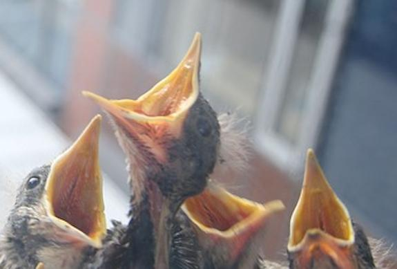 Обнаружены останки детеныша одной из первых птиц на нашей планете